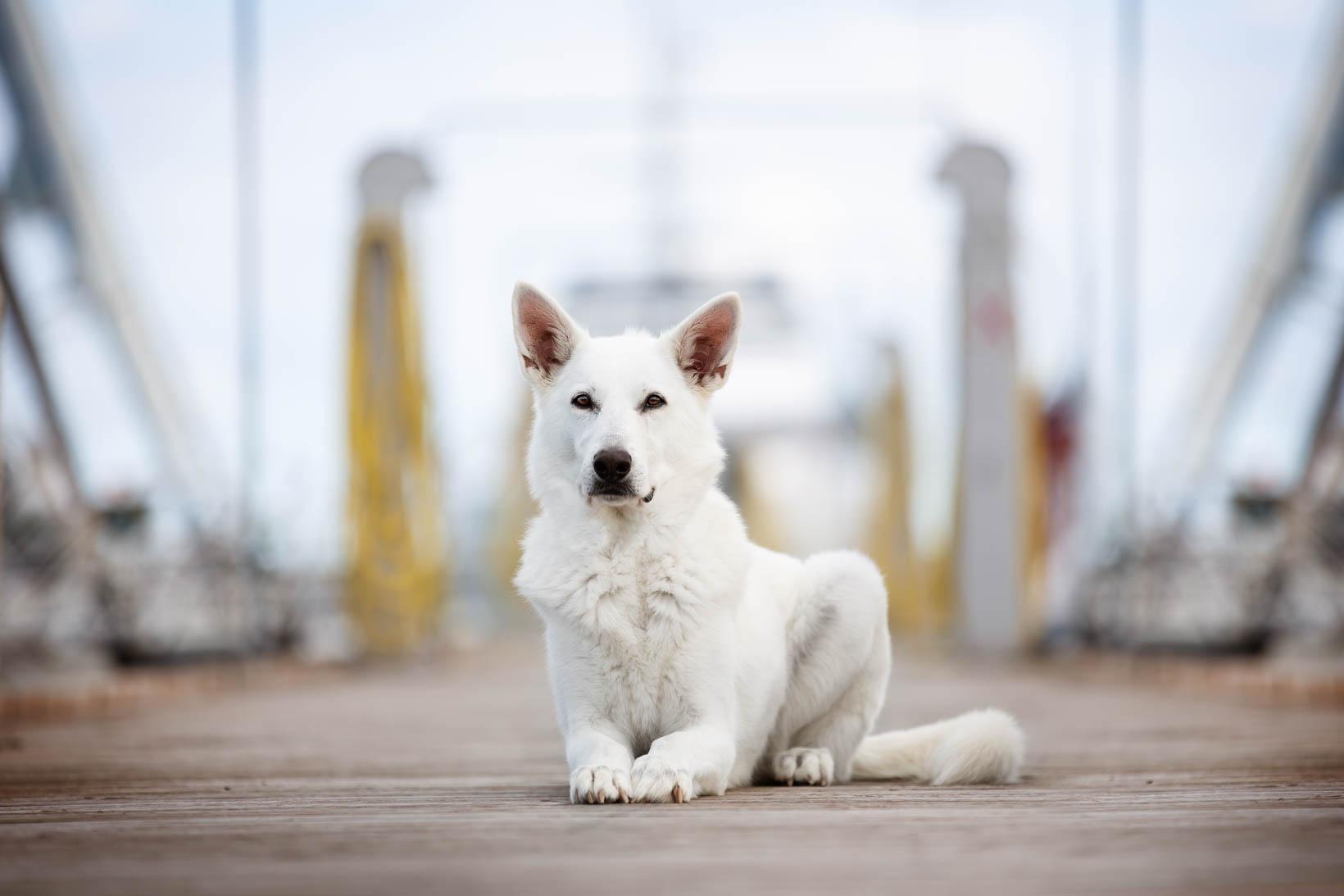 wie Hund fotografieren_Tierfotografie_Hundefotos klappen nicht