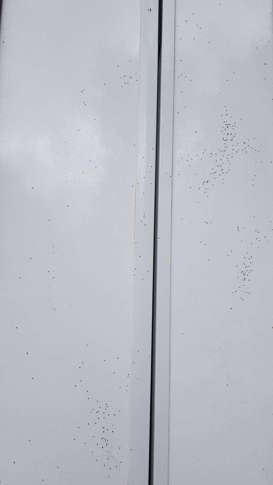 Midges_Schottland_Mücken_Plage_Erfahrungen_Wohnmobil