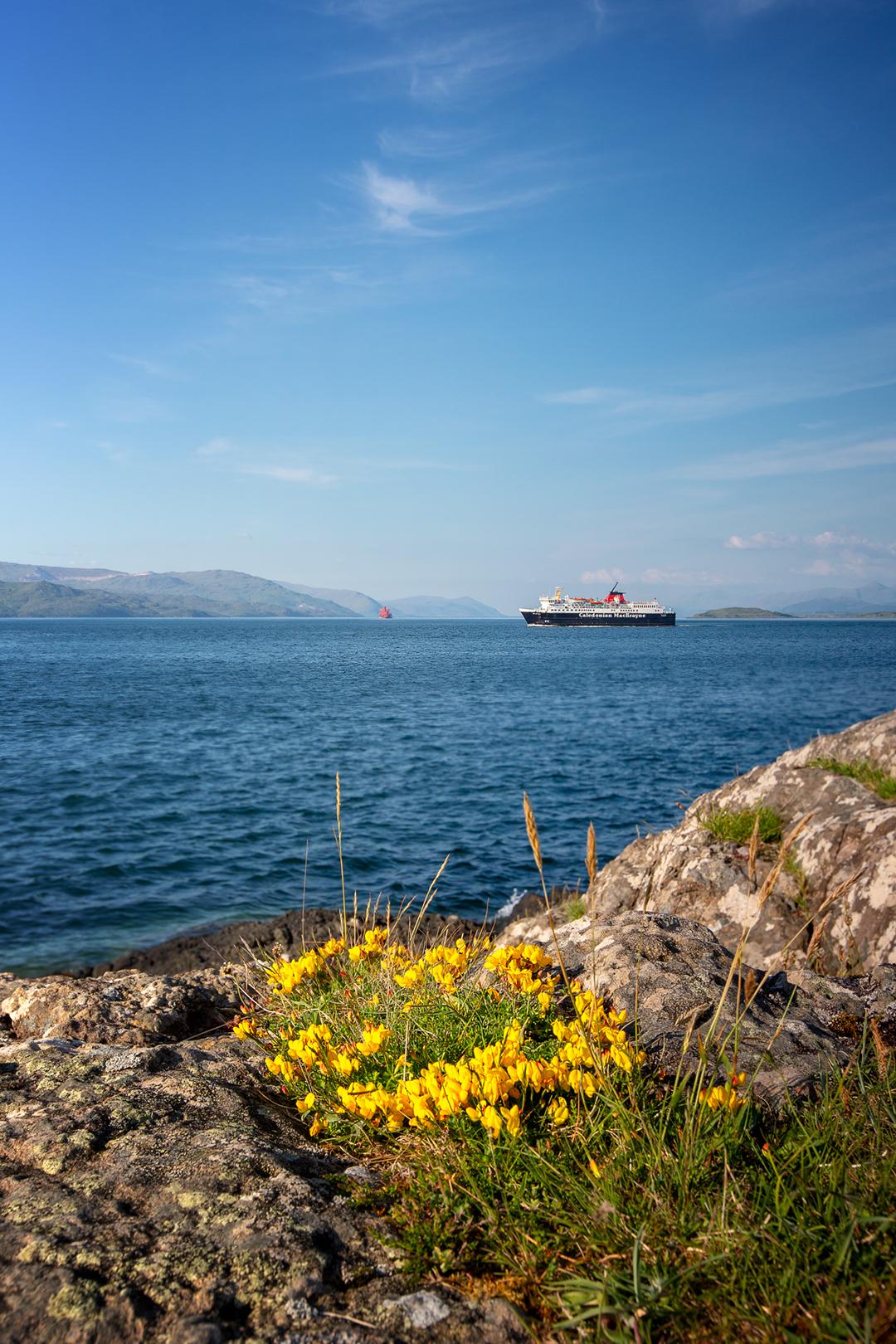 Isle of Mull_Schottland_Castle Duart_Wohnmobil_Hund