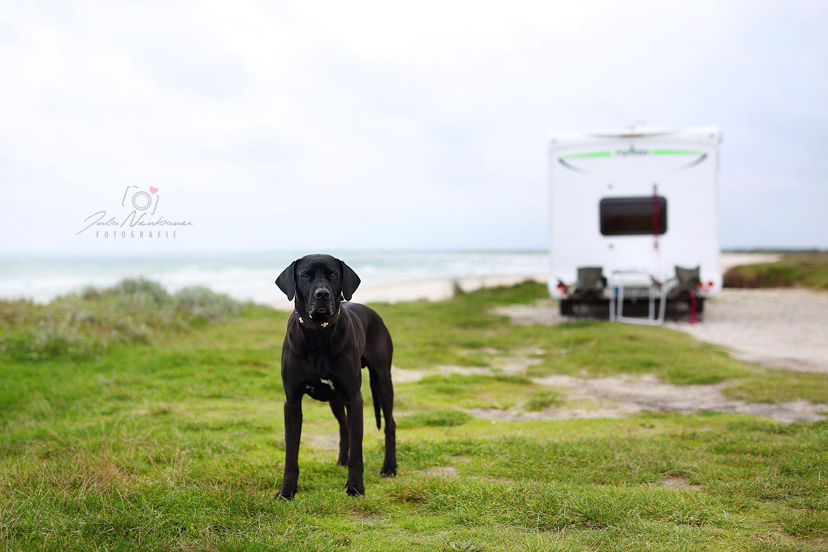 Camping_Hund_Einpackliste_was mitnehmen_Reise