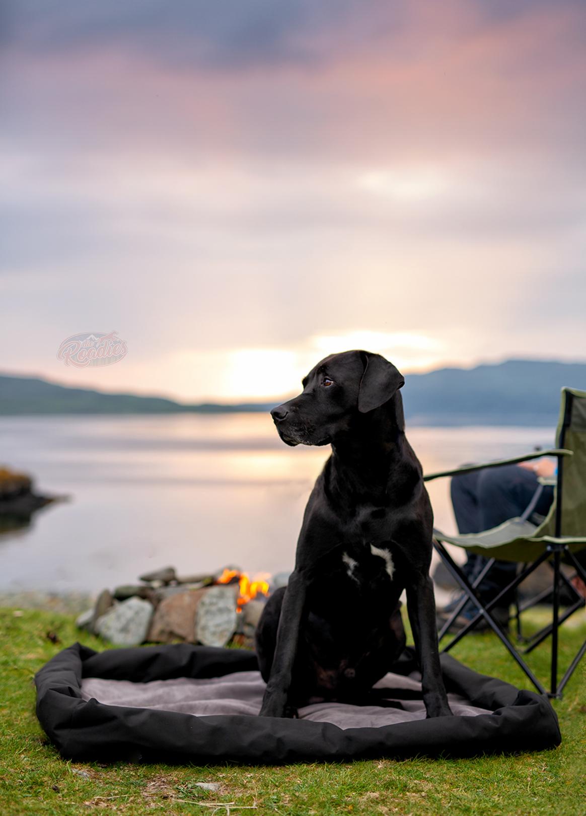 Einpackliste_Hund_was einpackewn für Hund_Urlaub_Reise