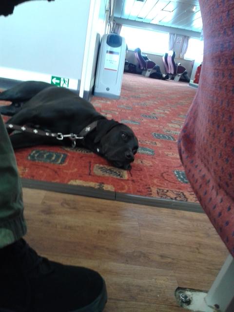 Fähre_Barra_Schottland_Hund_Die Roadies_Reisetagebuch_Wohnmobil