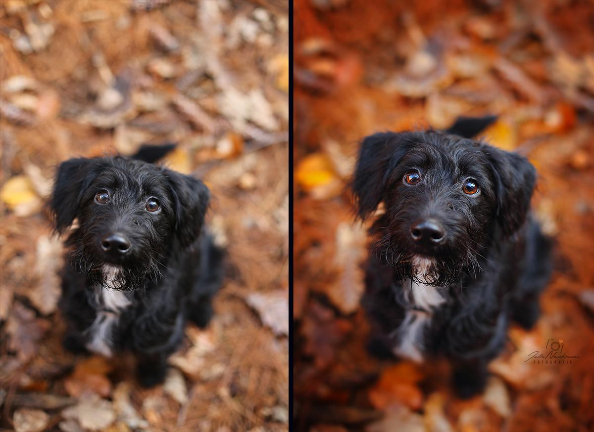 Hundefotos bearbeiten_Bildbearbeitung_Photoshop_Lightroom