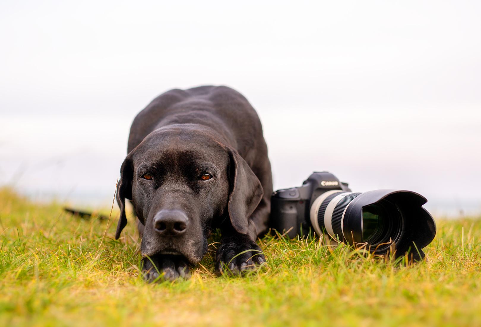 Hundefotos_welche Kamera_Objektiv