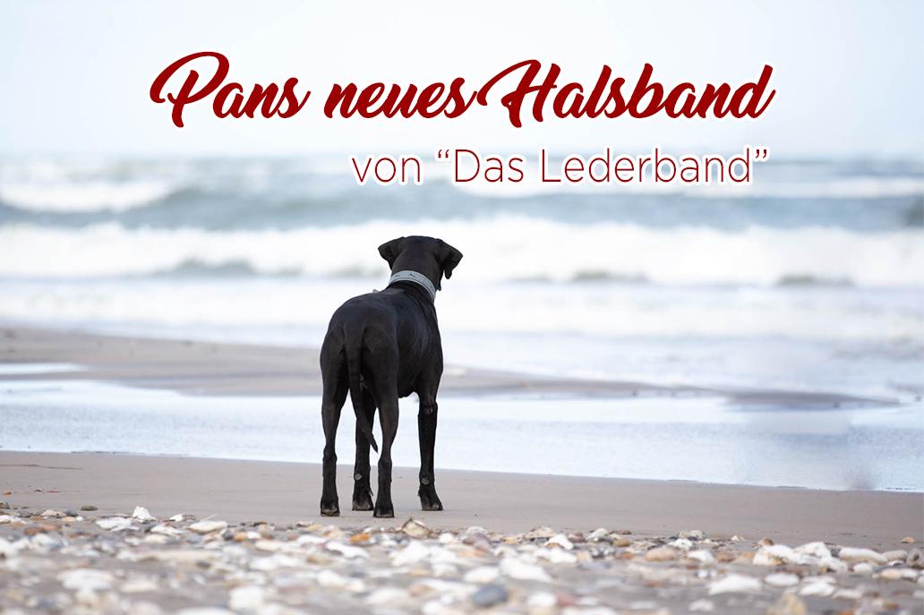 Pans neues Halsband_Das Lederband_Hund_Hundehalsband_Leine