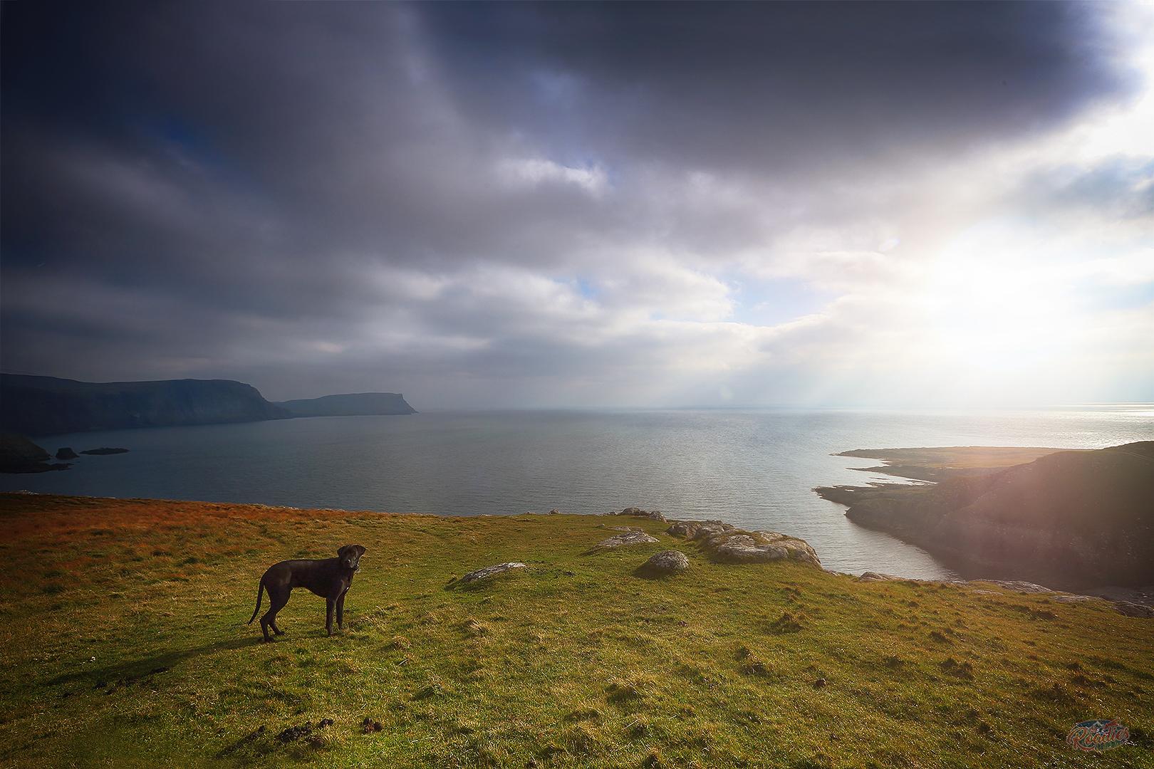 Einreise_Hund_Urlaub_Schottland_England_Großbritannien_Bestimmungen