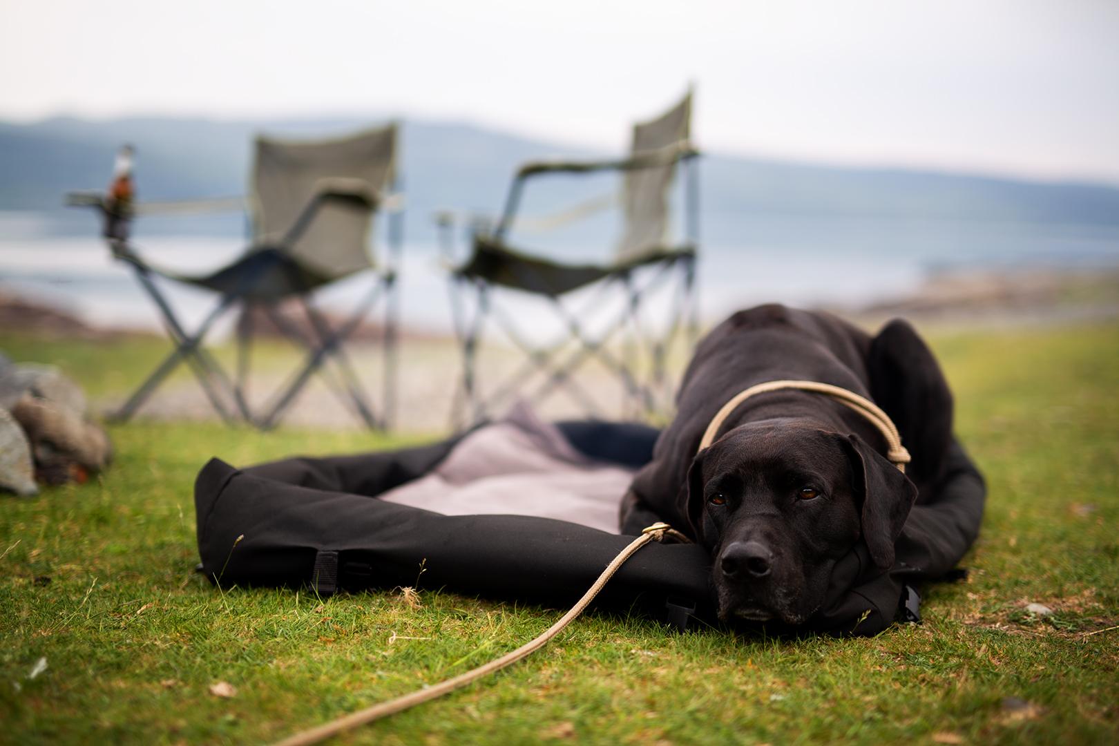 Hundebett_unterwegs_outdoor_wasserfest_regenabweisend