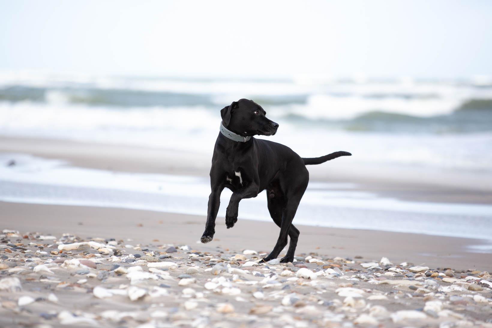 Das Lederband_Halsband_Hundehalsband_Hund