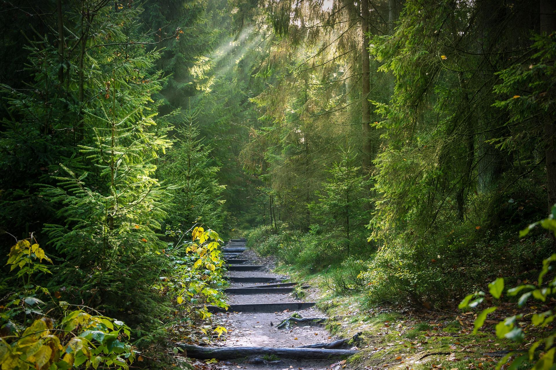 Der Wald birgt einen großen Schatz an Heilkraft