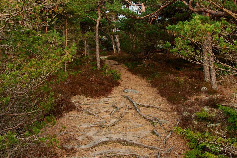 Ein Weg führt tiefer in einen Wald hinein und symbolisiert damit den Weg in den  Inneren Park