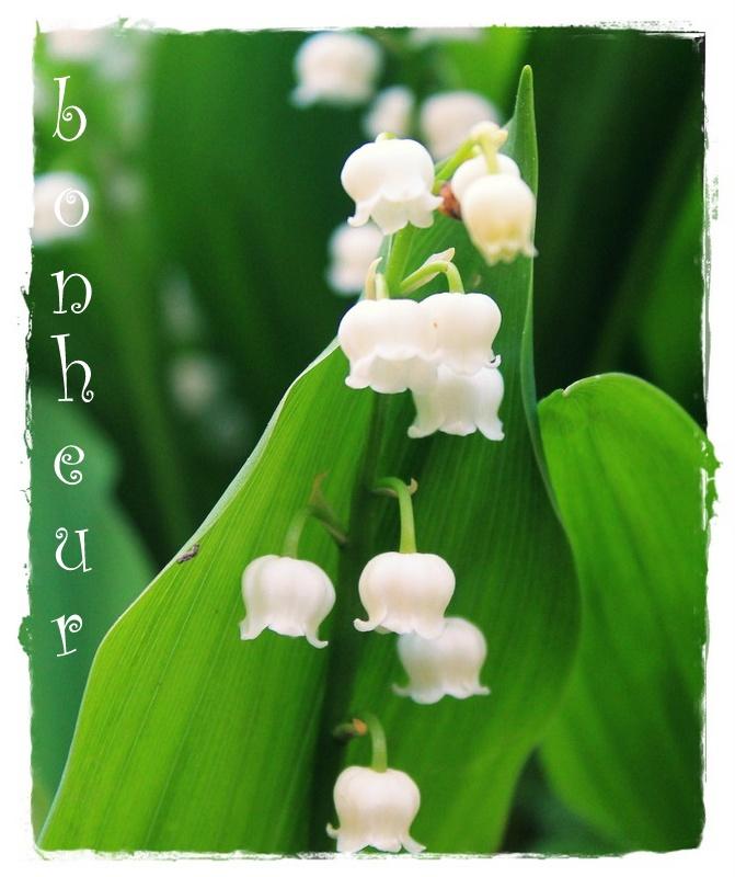Le muguet, une fleur porte-bonheur ?