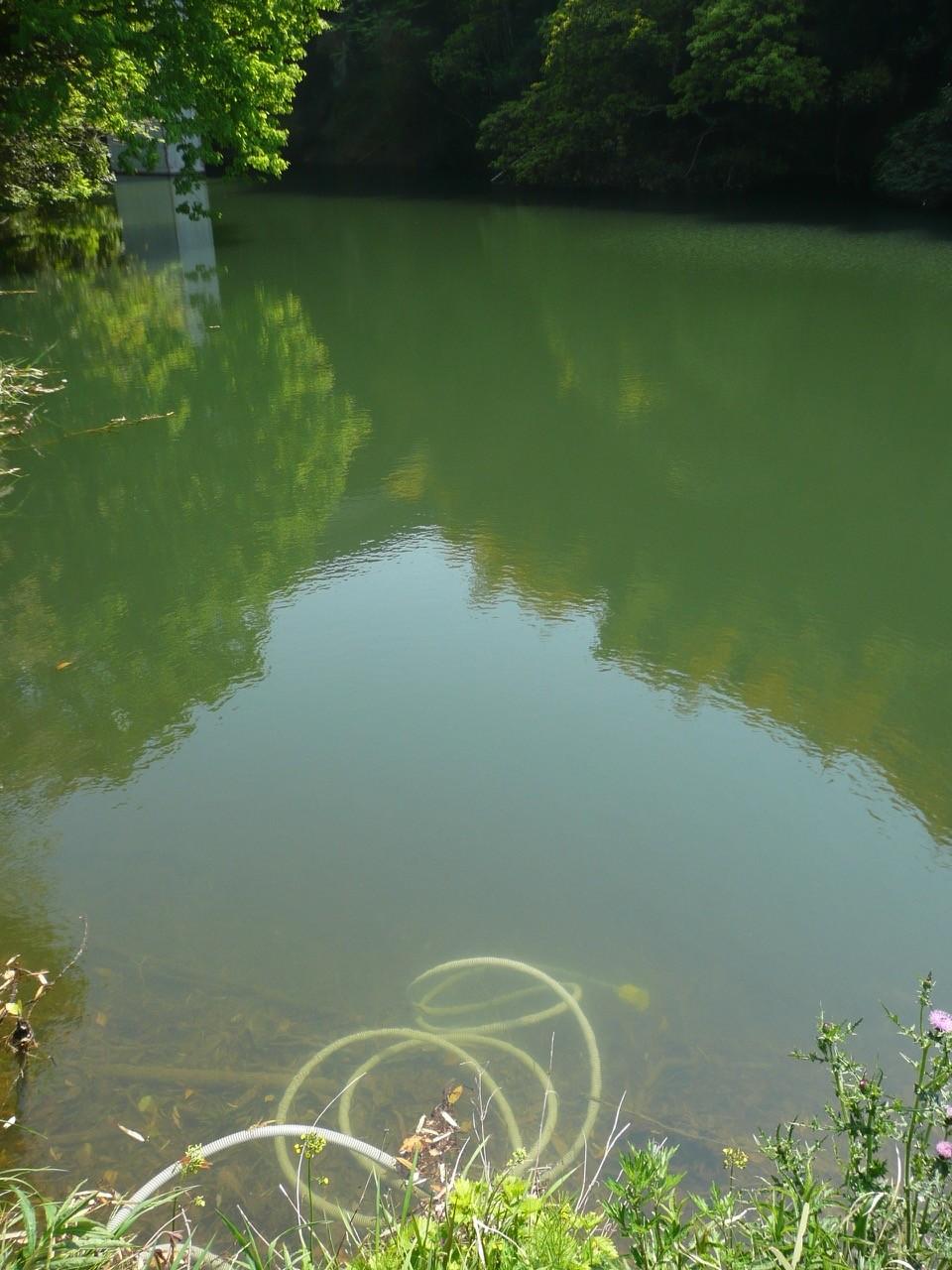 給水場の池、水は良い状態