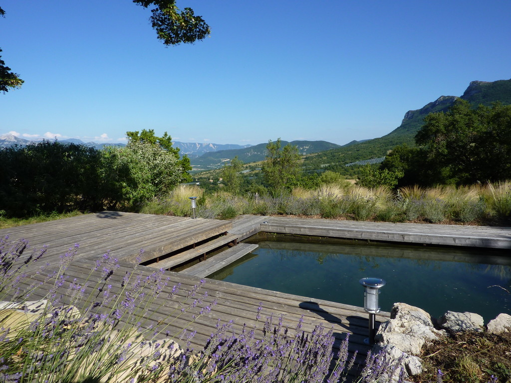 Wooden deck surrounded by lavender