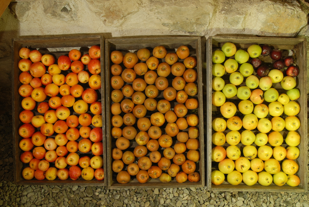 Pommes et vigne ont leur route