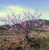 Frühlingserwachen in Berlou