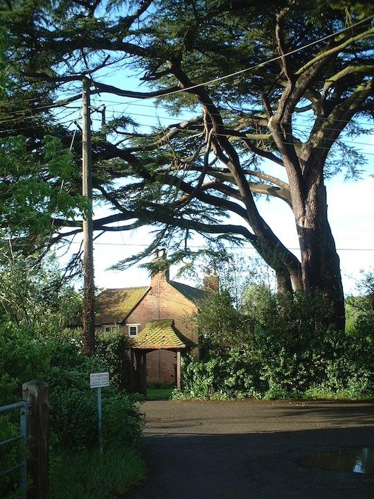 家より巨大な木が沢山あるイギリスの風景。