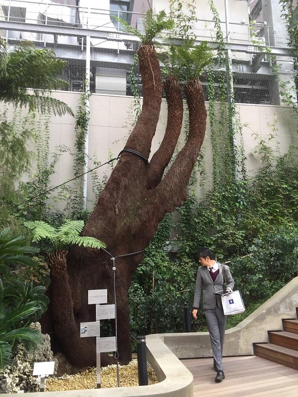 物凄い大きなシダ植物!これが銀座の真ん中にある!