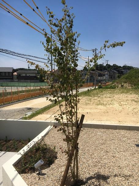 樹木を植える際は、木杭を打ち込んで支柱にします