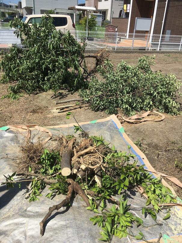 丸ごと引っこ抜いた木も、最後は細かく切る!