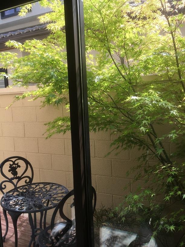 お風呂の中から素敵なお庭が見える。イロハモミジは新緑が美しい。