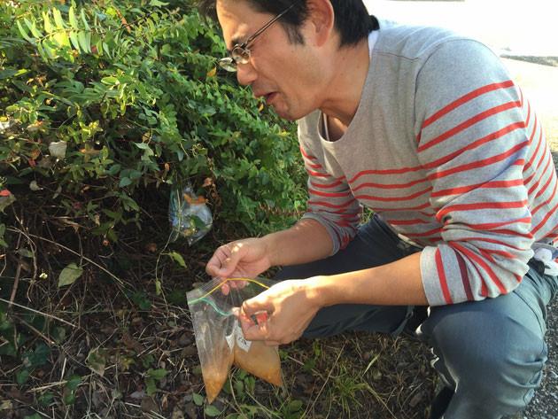 これは動物も食べない銀杏の香りを嗅いでしまったガーデンドクター柴ちゃん