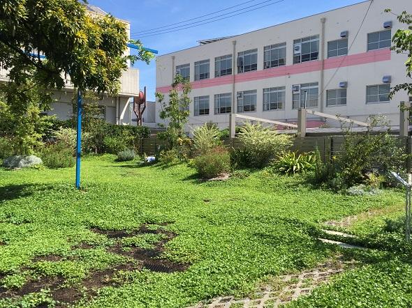 グランドカバーの緑がはえてきて庭って感じがしてきました!!!