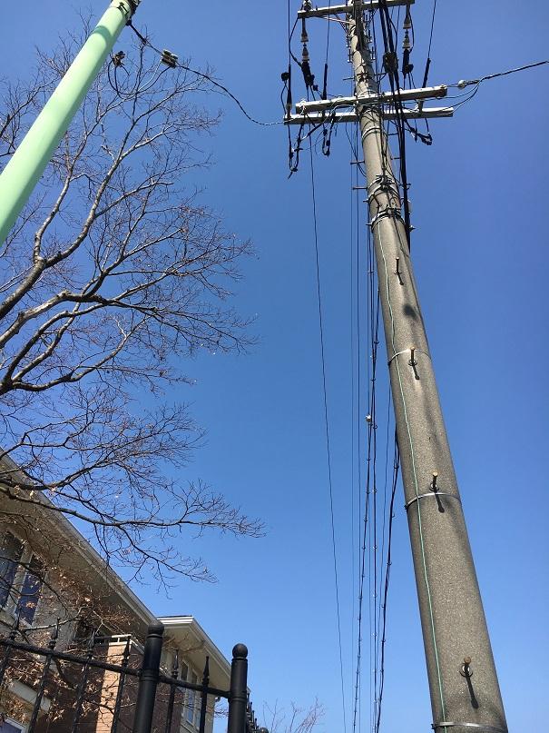 電線に絡んでいた枝をカットしました!!