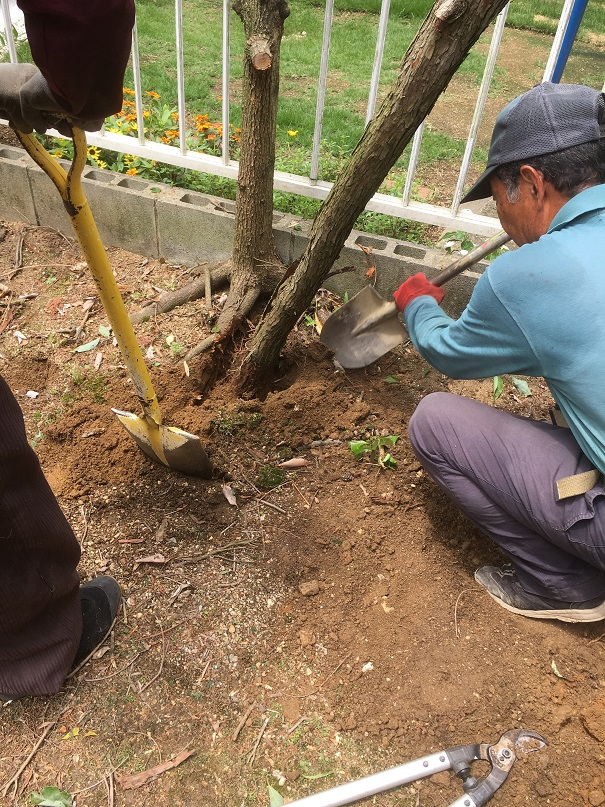 スコップで、周りの土を掘ります!