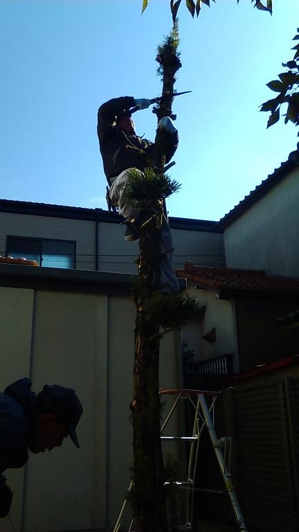 枝をカットしたら、次は幹を上からカットしていきます。