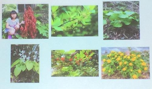 大自然の中、野草が身近にある環境で育ったという菊池さん。
