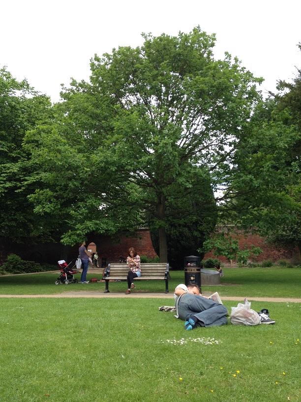 イギリスの公園に有る木は大きい。