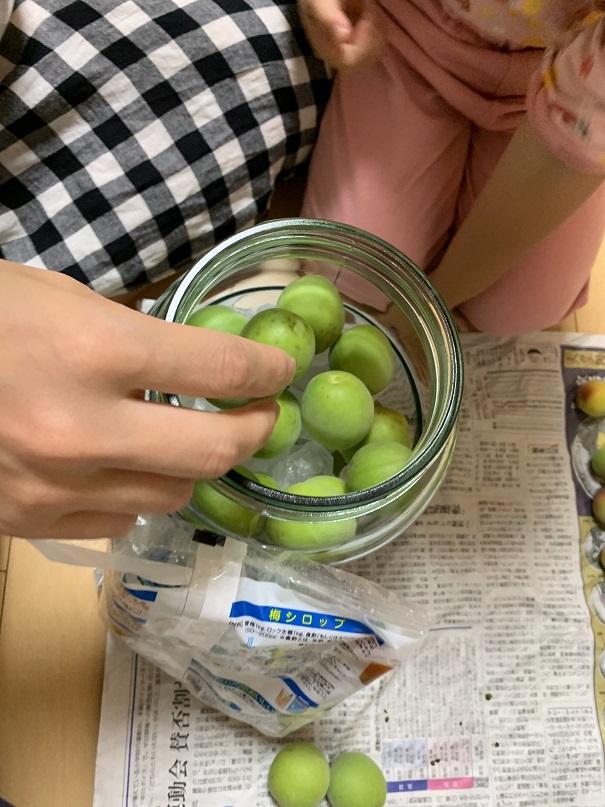 梅の実と氷砂糖を瓶に交互につめていきます。