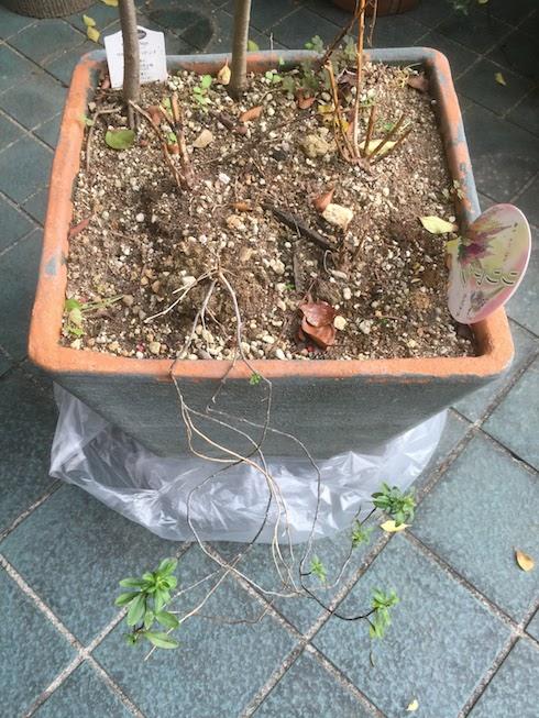 ビニール袋を広げて植木鉢をセット!
