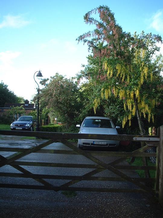 キングサリとアカシアが奇麗なイギリスの庭先