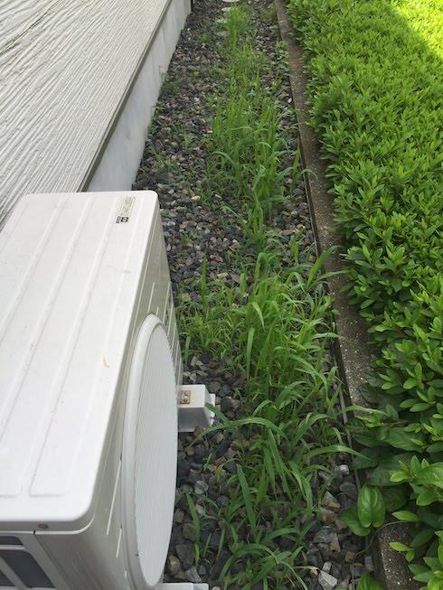 家のまわりにしかれた砂利。防草シートを砂利の下に敷いたのに生えてくる。