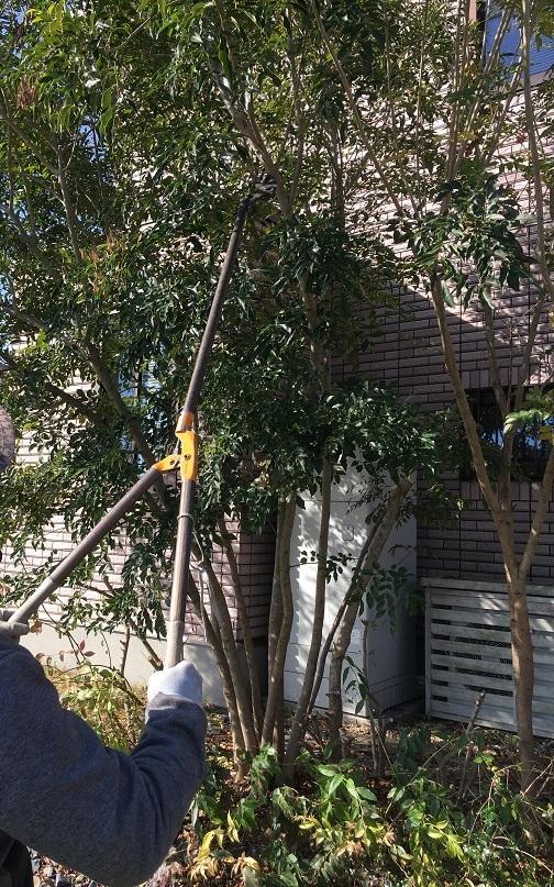 電線に当たりそうな程高く伸びてしまった樹木を剪定しました!