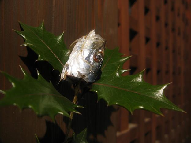ヒイラギの枝に刺したイワシの頭。