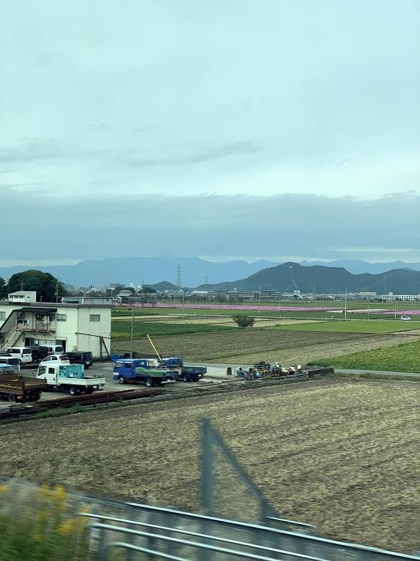 滋賀の近江のあたりかな?田んぼの中に一面ピンクのコスモス畑がありした。