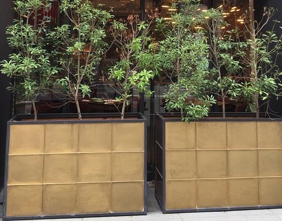 ゴールドの鉢植えに植木が並んでいる。