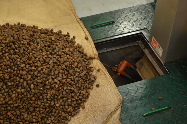 1.乾燥させた椿の種をゴミを取り除きながら入れていきます
