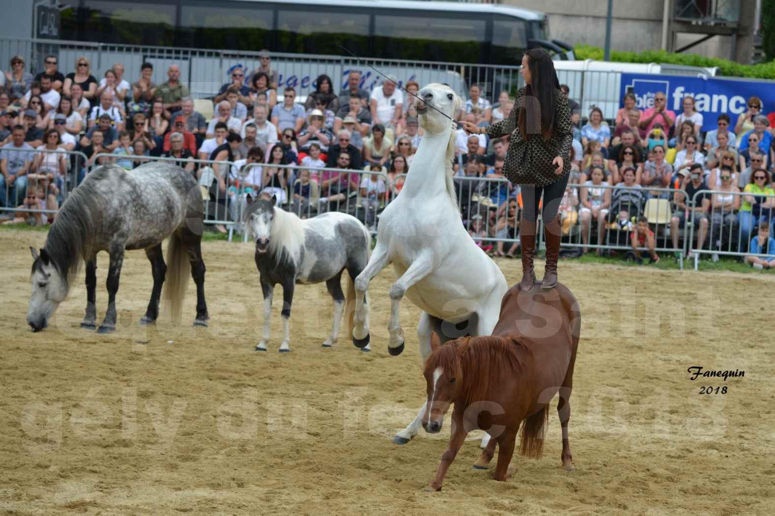 Spectacle Équestre le 3 juin 2018 à Saint Gély du Fesc - 5 chevaux en liberté - Anne Gaëlle BERTHO - 06