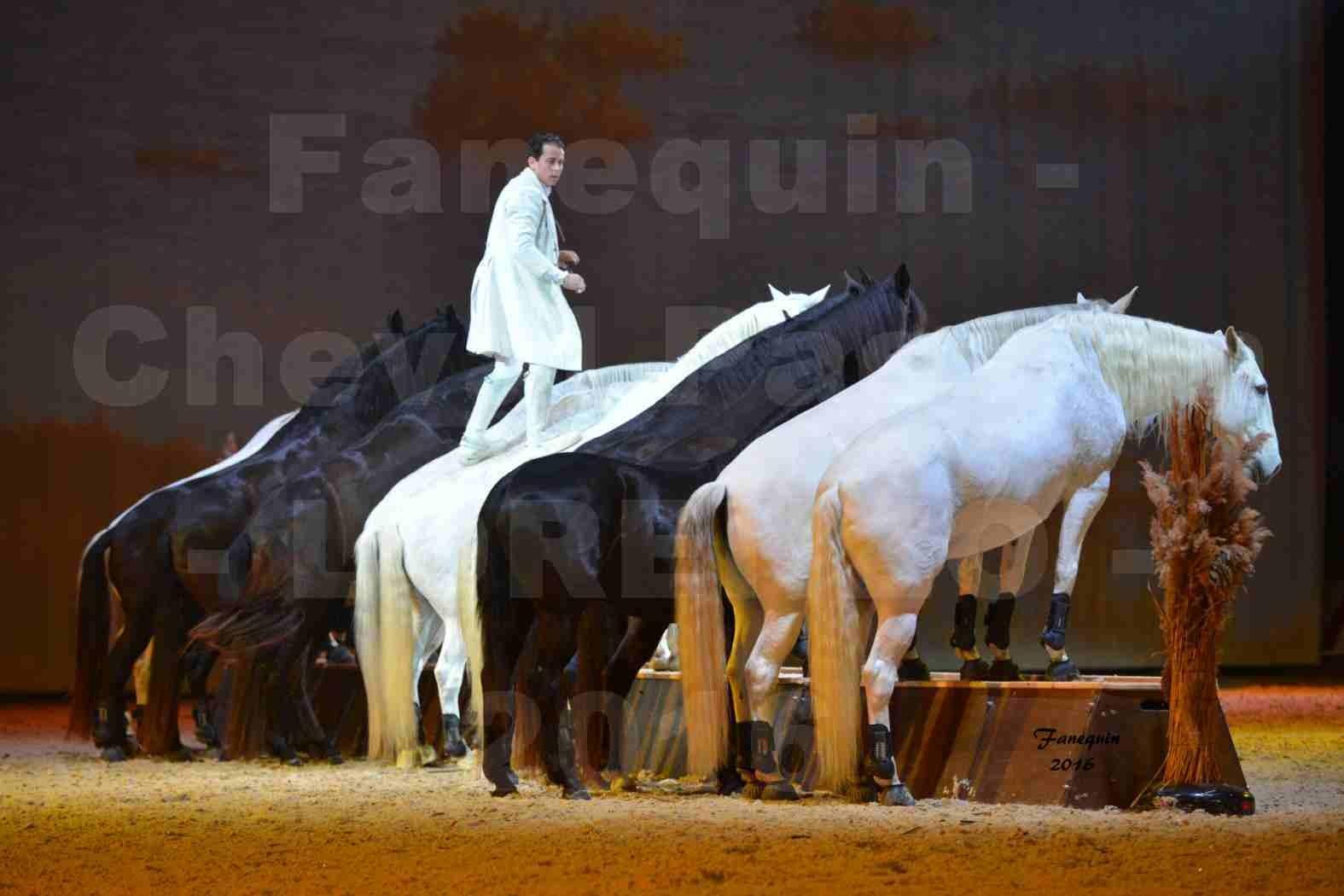 """Cheval Passion 2016 - Spectacle les Crinières d'OR - LORENZO """"Blanc"""" - représentation du 23 janvier 2016 - 41"""