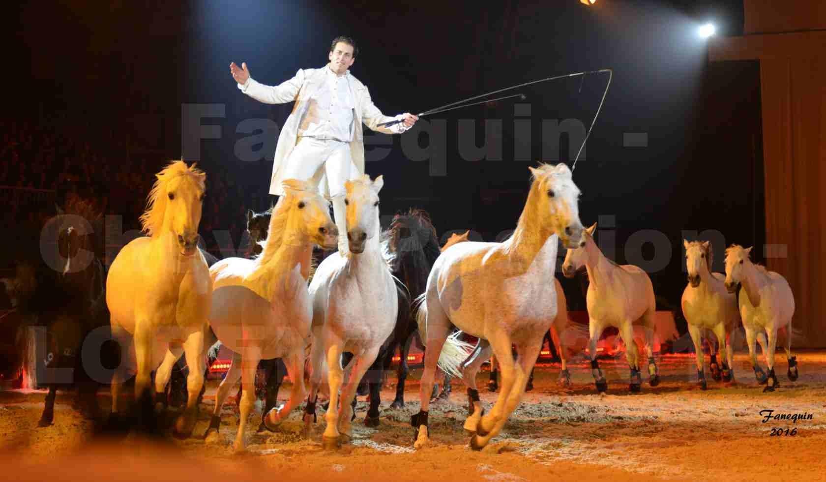 """Cheval Passion 2016 - Spectacle les Crinières d'OR - LORENZO """"Blanc"""" - représentation du 20 janvier 2016 - 35"""