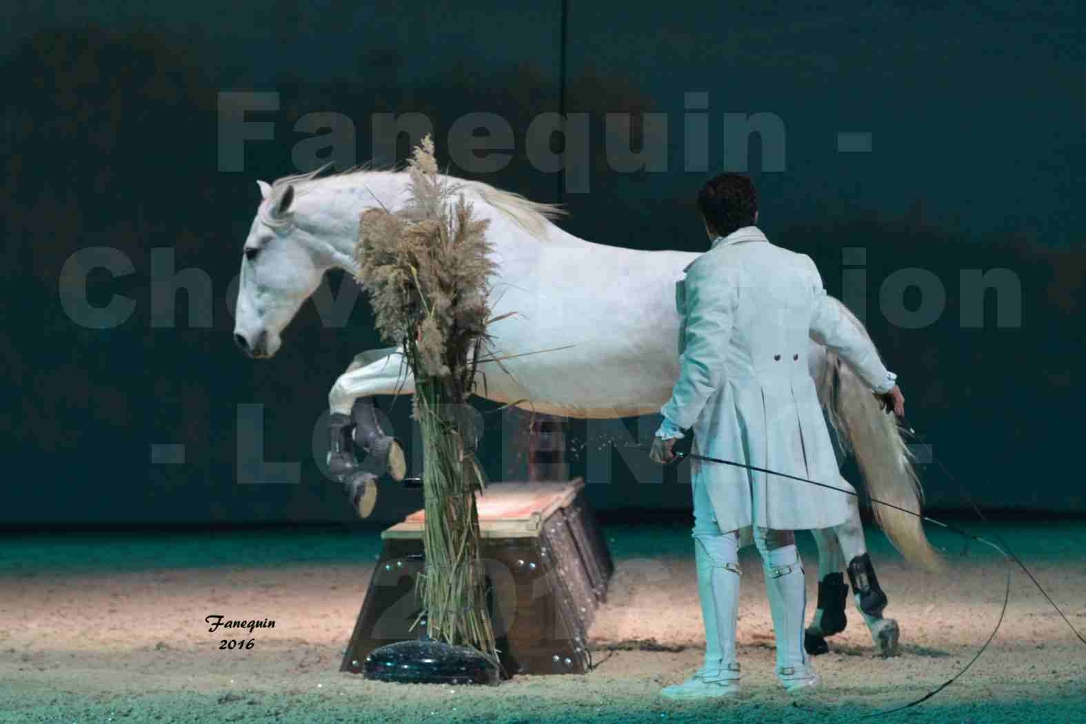 """Cheval Passion 2016 - Spectacle les Crinières d'OR - LORENZO """"Blanc"""" - représentation du 20 janvier 2016 - 08"""