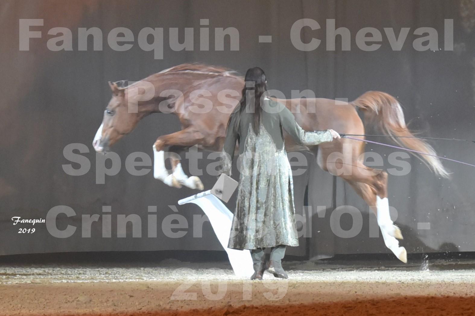Cheval Passion 2019 - Spectacle des CRINIÈRES d'OR - Frédéric PIGNON & Cheval Alezan en liberté - 16