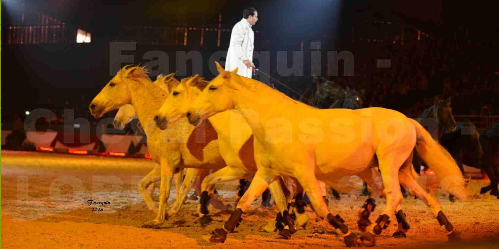 """Cheval Passion 2016 - Spectacle les Crinières d'OR - LORENZO """"Blanc"""" - représentation du 23 janvier 2016 - 28"""