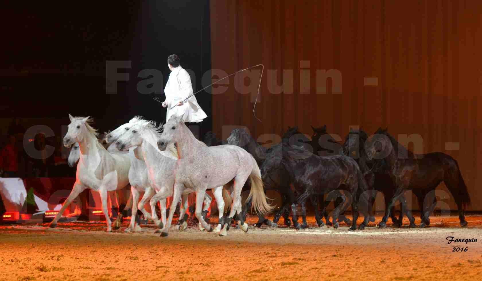 """Cheval Passion 2016 - Spectacle les Crinières d'OR - LORENZO """"Blanc"""" - représentation du 20 janvier 2016 - 32"""