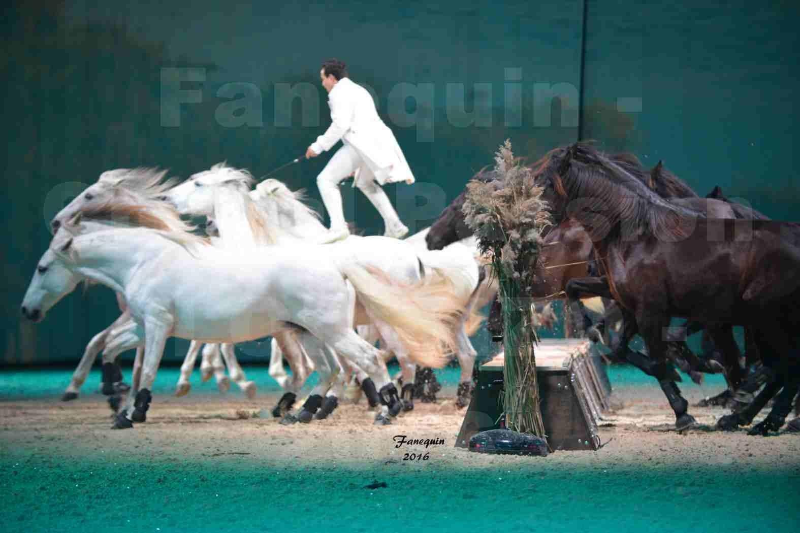 """Cheval Passion 2016 - Spectacle les Crinières d'OR - LORENZO """"Blanc"""" - représentation du 20 janvier 2016 - 18"""
