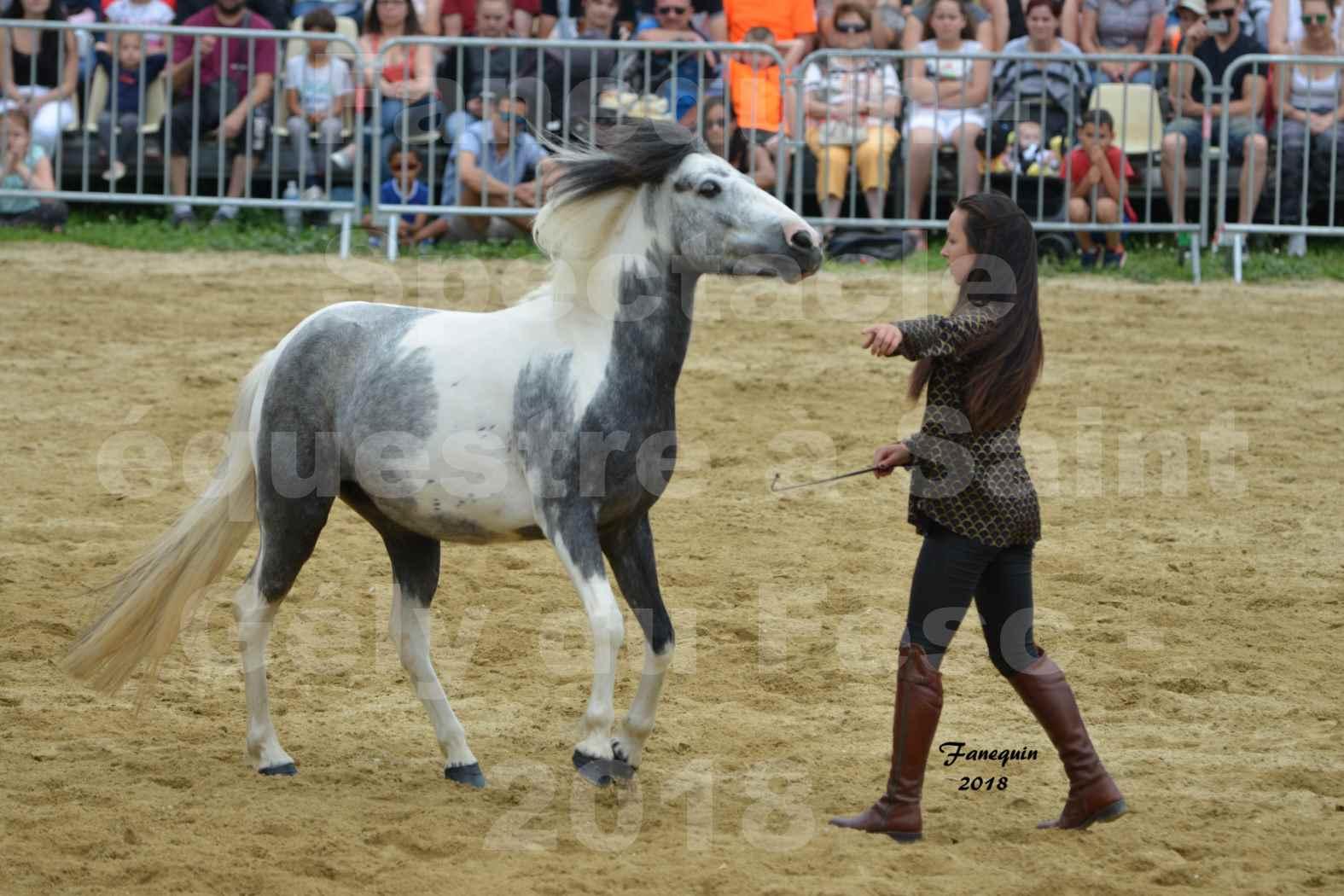 Spectacle Équestre le 3 juin 2018 à Saint Gély du Fesc - 5 chevaux en liberté - Anne Gaëlle BERTHO - 04