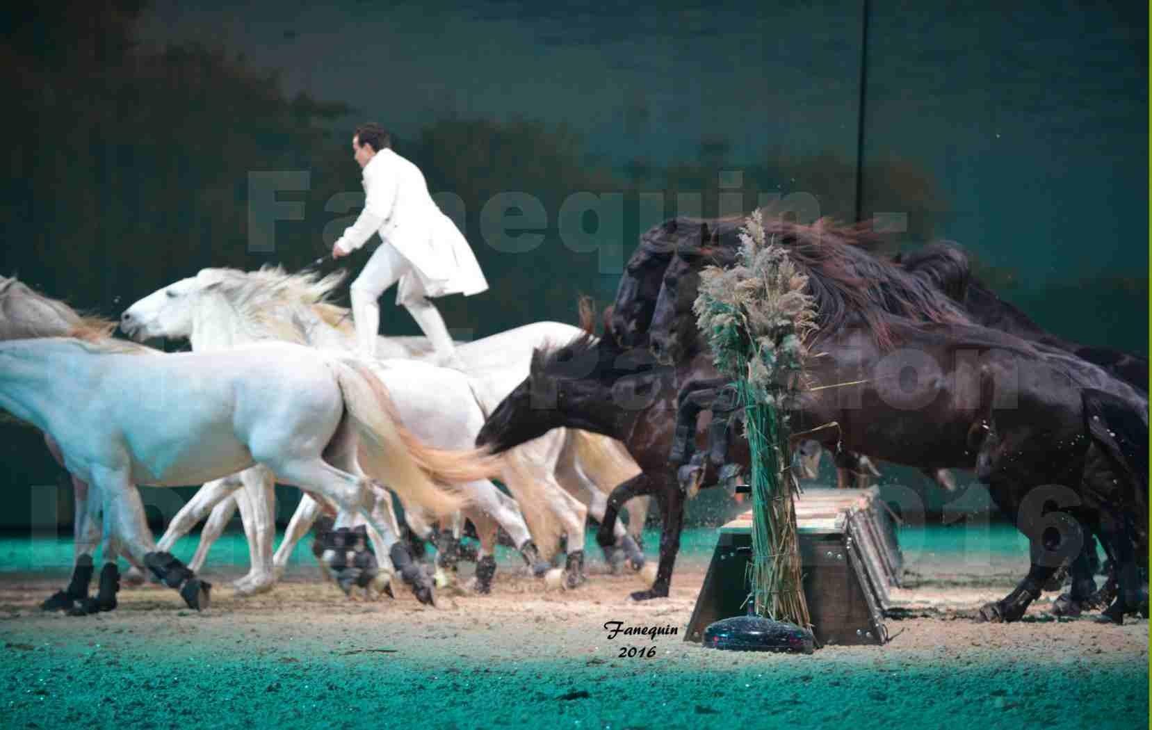 """Cheval Passion 2016 - Spectacle les Crinières d'OR - LORENZO """"Blanc"""" - représentation du 20 janvier 2016 - 19"""